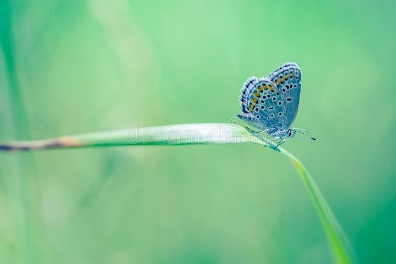 Vue de nature d'été d'un beau papillon avec le fond coloré de pré images libres de droits