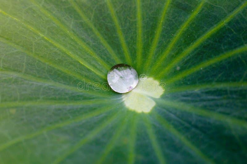 Vue de nature de plan rapproché de forêt de bambous de feuille verte sur la tache floue de fond photographie stock