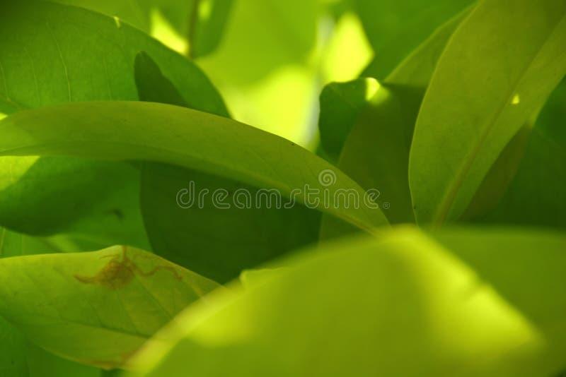 Vue de nature de plan rapproch? de feuille verte dans le jardin photos stock