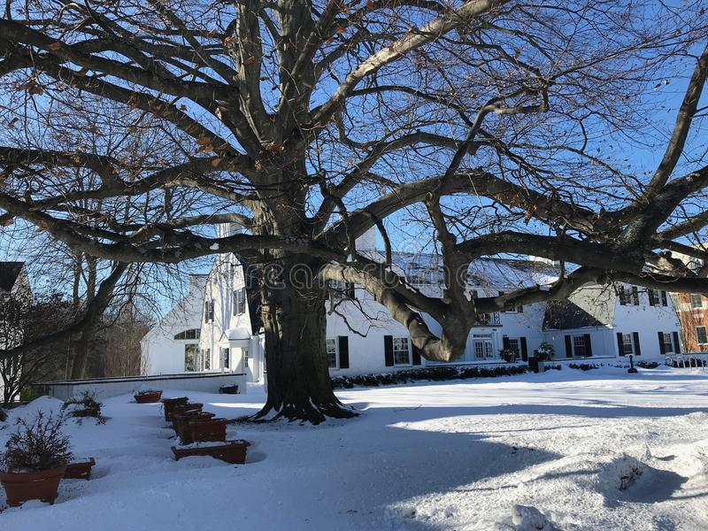 Vue de neige autour d'un beau vieil arbre Le Connecticut, 2018 images libres de droits