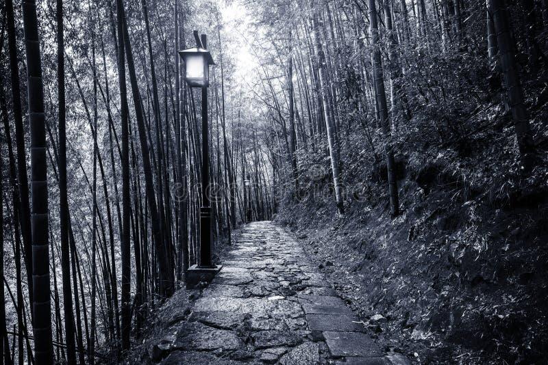 Vue de nuit du chemin dans la forêt en bambou image libre de droits