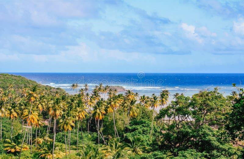 Vue de palmeraie et d'Océan Atlantique de la colline de l'île de Bequia photos stock
