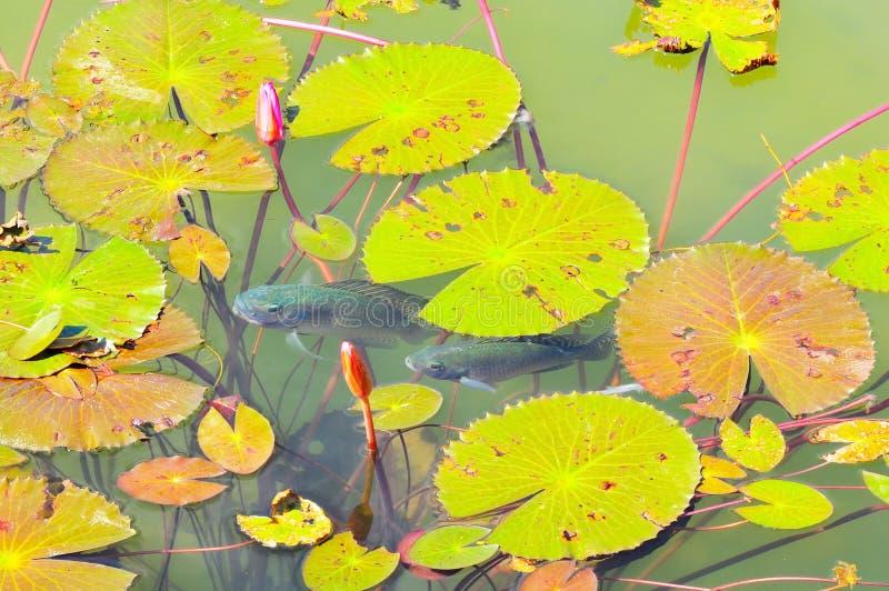 Vue de panorama d'étang décoré photos stock