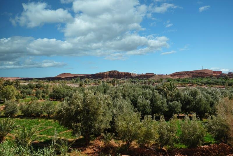 Vue de paysage de champ de culture dans l'oasis image stock