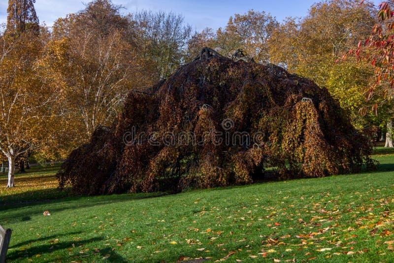 Vue de paysage d'arbre tourné étrange dans le Hyde Park images stock