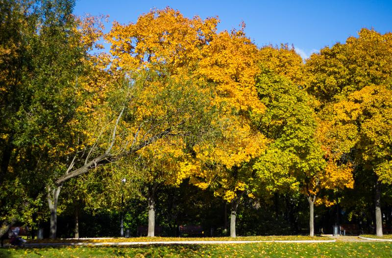 Vue de paysage d'automne de l'allée d'or avec les arbres colorés dans les étangs de Novodevichy de parc à Moscou Nature russe en  images stock