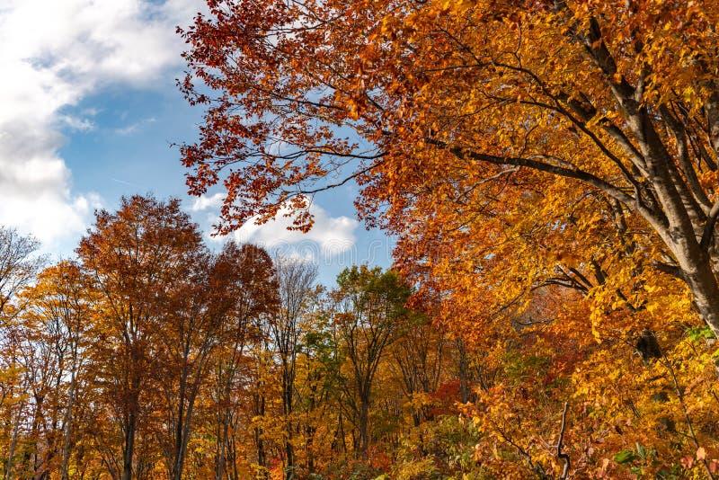 Vue de paysage de feuillage d'automne, beaux paysages photos stock