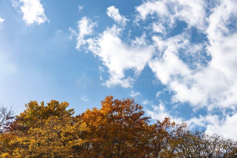 Vue de paysage de feuillage d'automne, beaux paysages photo libre de droits