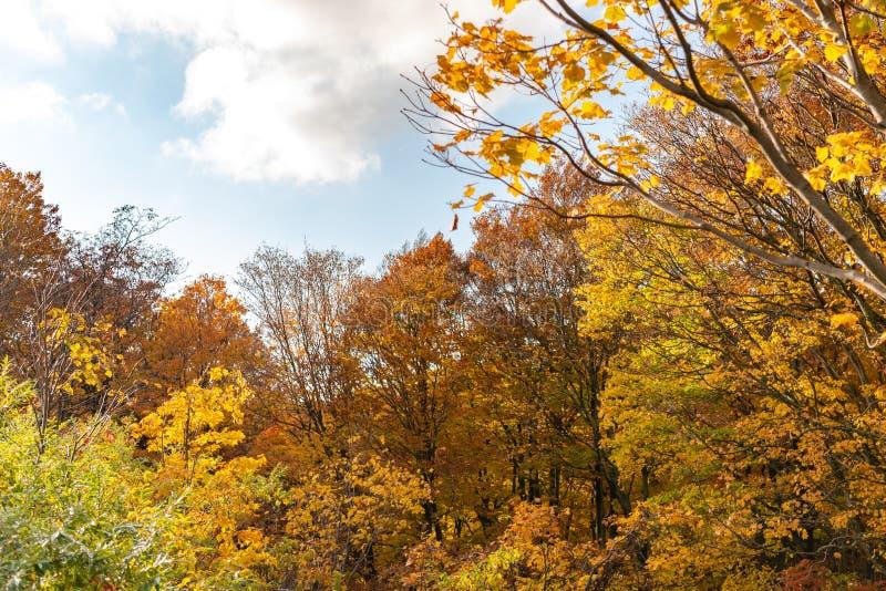 Vue de paysage de feuillage d'automne, beaux paysages photo stock