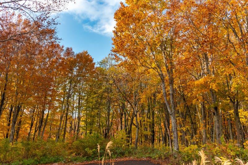 Vue de paysage de feuillage d'automne, beaux paysages images stock