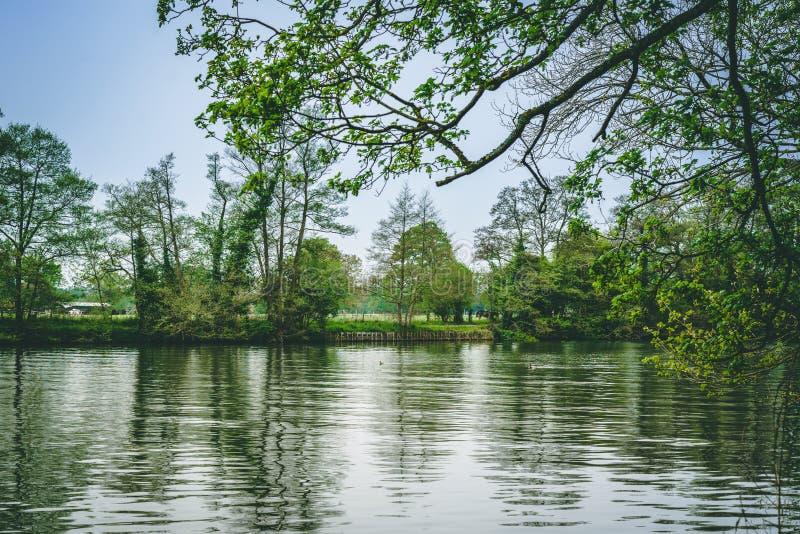 Vue de paysage de la Tamise avec les canards et le cheval photo libre de droits