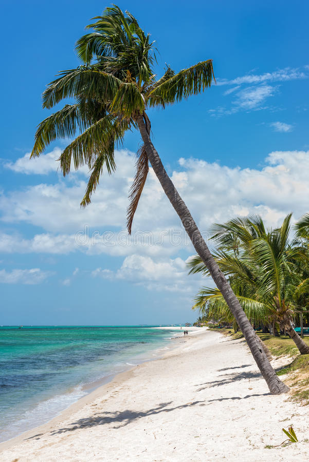 Vue de plage tropicale gentille avec des paumes photos libres de droits