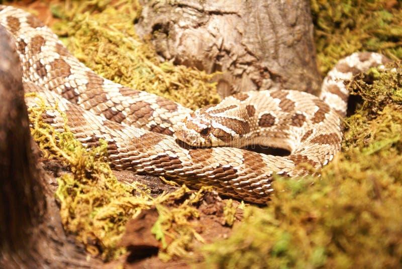 Vue de plan rapproché d'un serpent photos stock