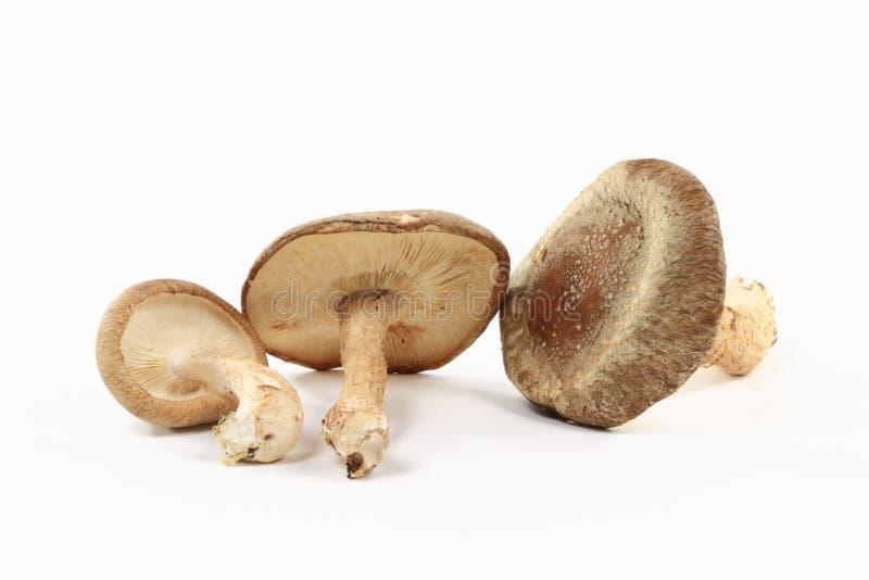 Vue de plan rapproché des champignons de couche organiques Shitake. photographie stock