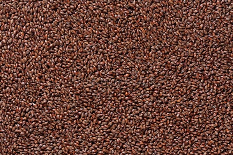 Vue de plan rapproché des grains de malt d'orge Ingrédient pour la bière Backgro image stock