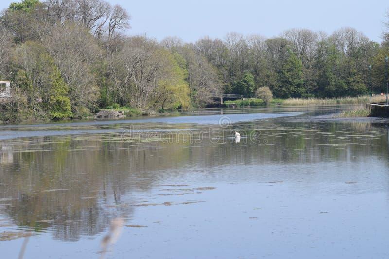 Vue de rivière à travers la réflexion des arbres au-dessus de l'eau photo stock