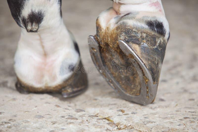 Vue de sabot de pied de cheval en dehors des écuries images libres de droits