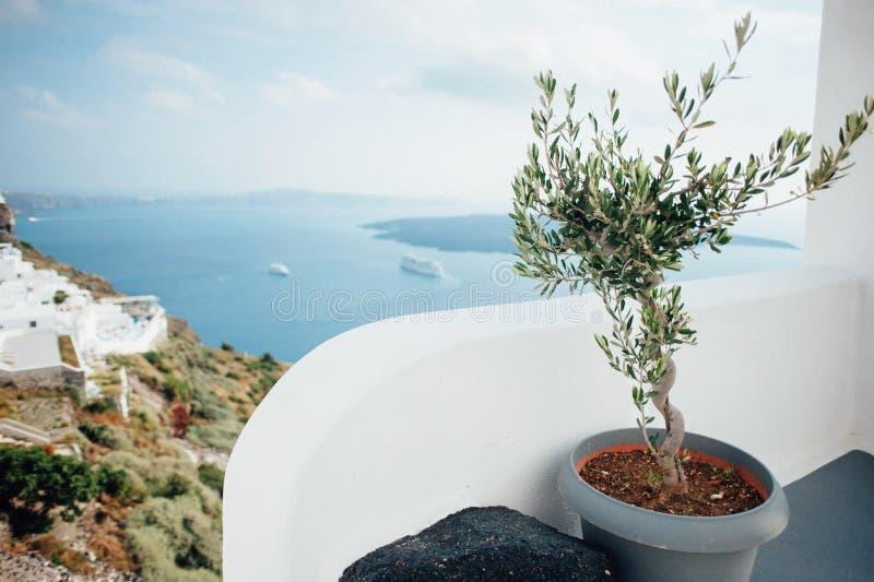 Vue de Santorini avec l'olivier photo stock