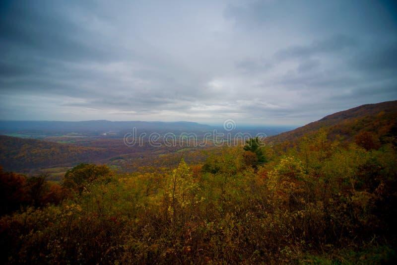 Vue de sommet de feuillage d'automne photos libres de droits