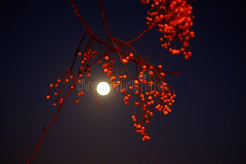 Vue de 20/01/19 supermoon avant l'éclipse lunaire photo stock