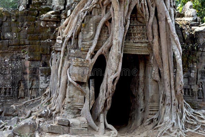 Vue de temple antique près d'Angkor Vat, Siem Reap, Cambodge Racines d'arbre autour de ruine de temple photographie stock