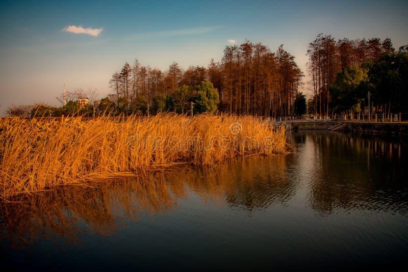 Vue de terre humide de coucher du soleil photos libres de droits
