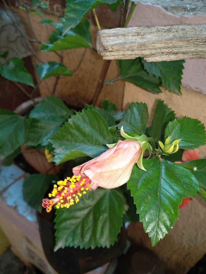 vue de verdure - fleur rouge photographie stock libre de droits
