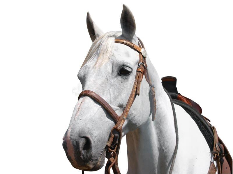 Vue de verticale du cheval d'un cowboy photos libres de droits