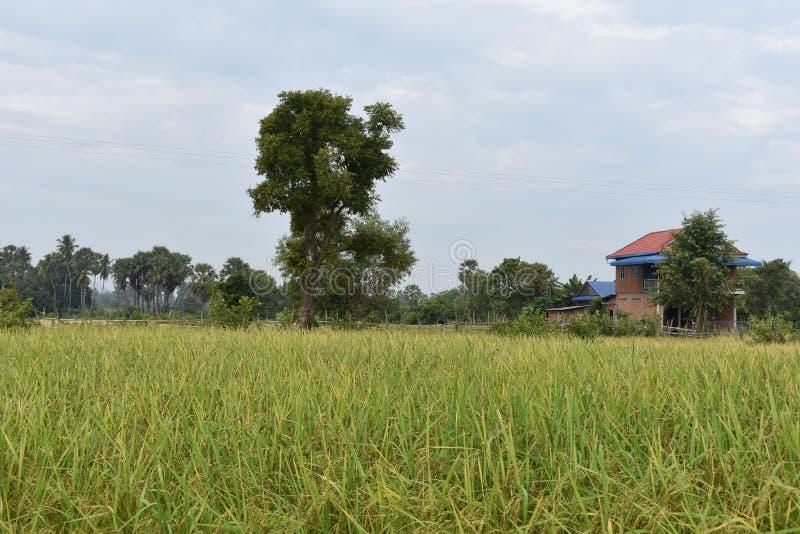Vue de village du champ image libre de droits