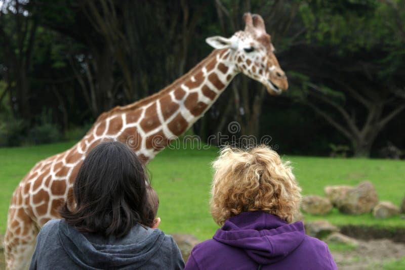Download Vue de zoo photo stock. Image du regard, giraffe, stationnement - 733678