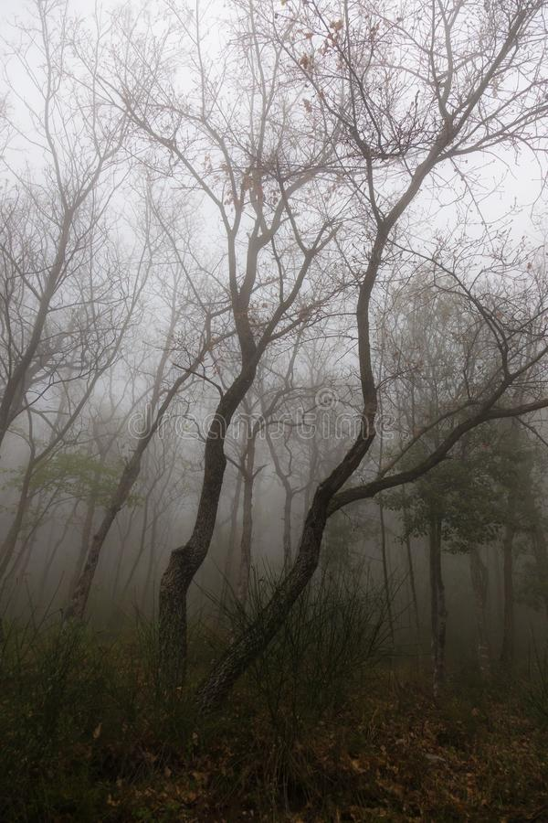 Vue des arbres au milieu d'un bois, avec la brume et le brouillard, obscurité a images stock