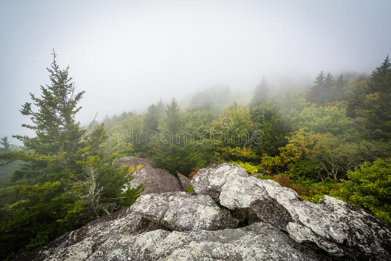 Vue des arbres en brouillard de roche noire, à la montagne première génération, I image stock