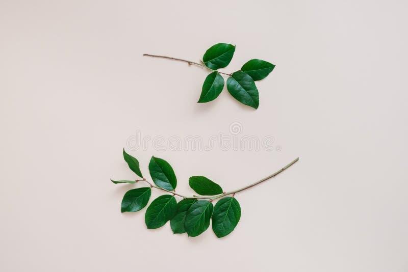 Vue des branches photo stock