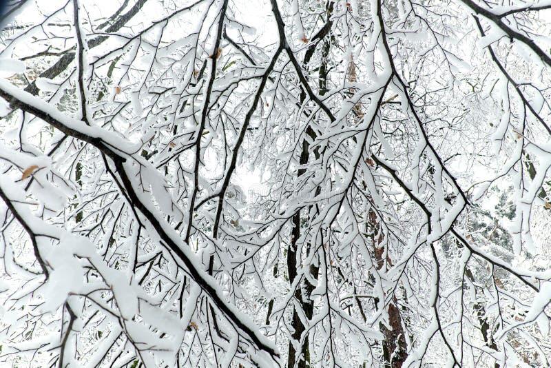 Vue des branches dans une forêt en hiver avec la neige photographie stock