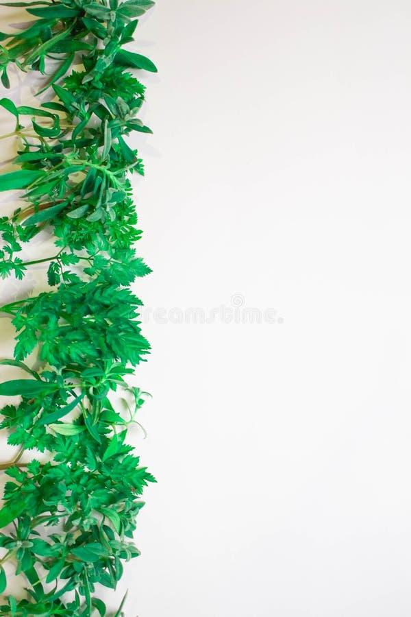 Vue des branches vertes, feuilles sur un fond blanc Configuration plate, vue supérieure images stock