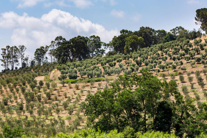 Vue des champs et des collines toscans dans la région de Maremma en Italie photo libre de droits