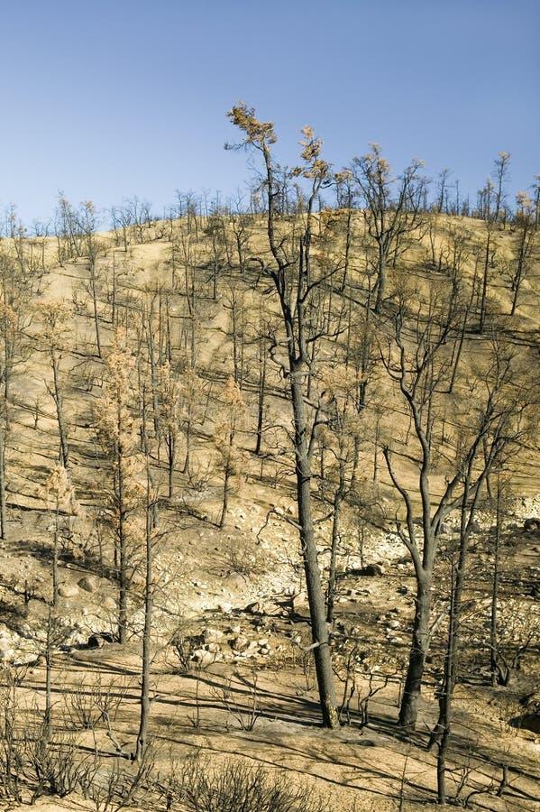 Vue des dégâts causés par le feu du feu de jour, 2006, le long de la route de vallée de Lockwood (près du MNT de pin et parc de F photographie stock