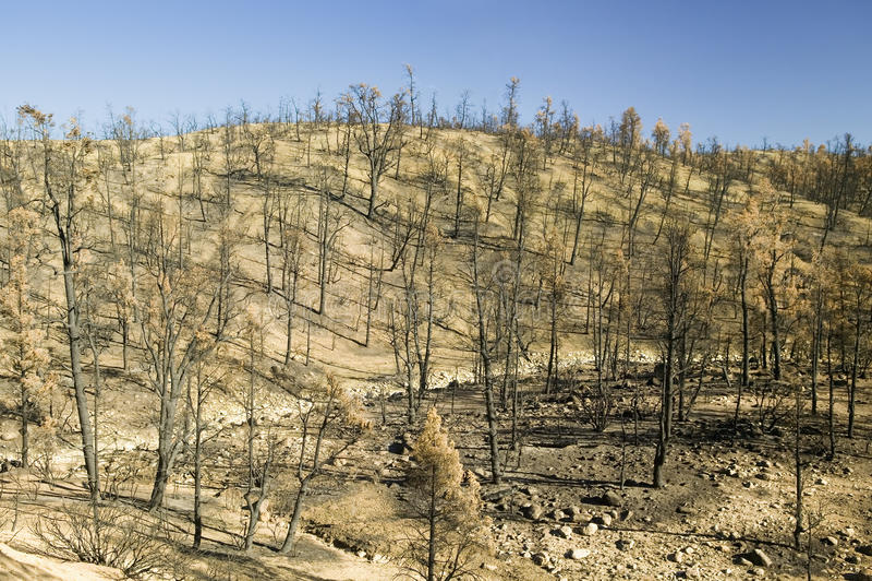 Vue des dégâts causés par le feu du feu de jour, 2006, le long de la route de vallée de Lockwood (près du MNT de pin et parc de F photo stock