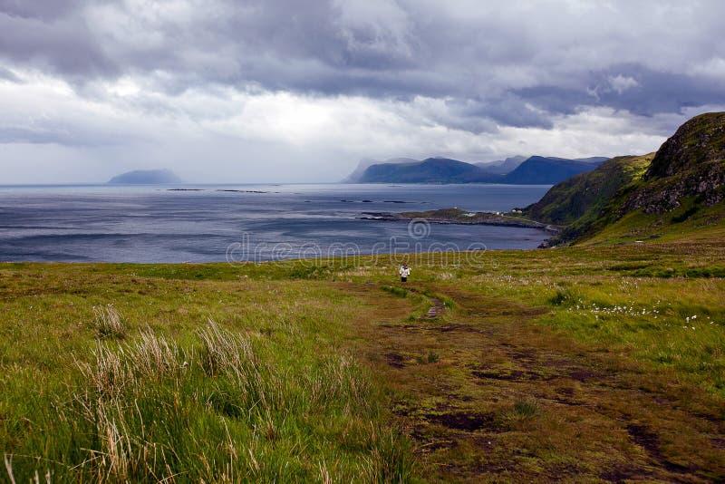 Vue des falaises d'oiseau sur l'océan et des nuages en Norvège photographie stock libre de droits