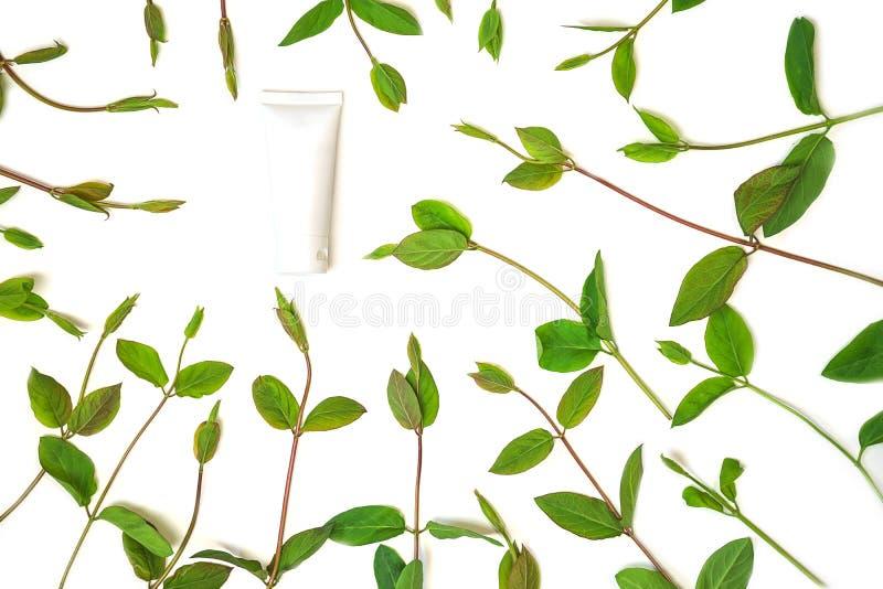 Vue des feuilles de vert de ressort et du pot de cr?me cosm?tique, d'isolement sur le fond blanc photo stock
