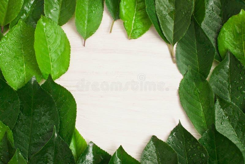 Vue des feuilles vertes, fond en bois blanc photographie stock libre de droits