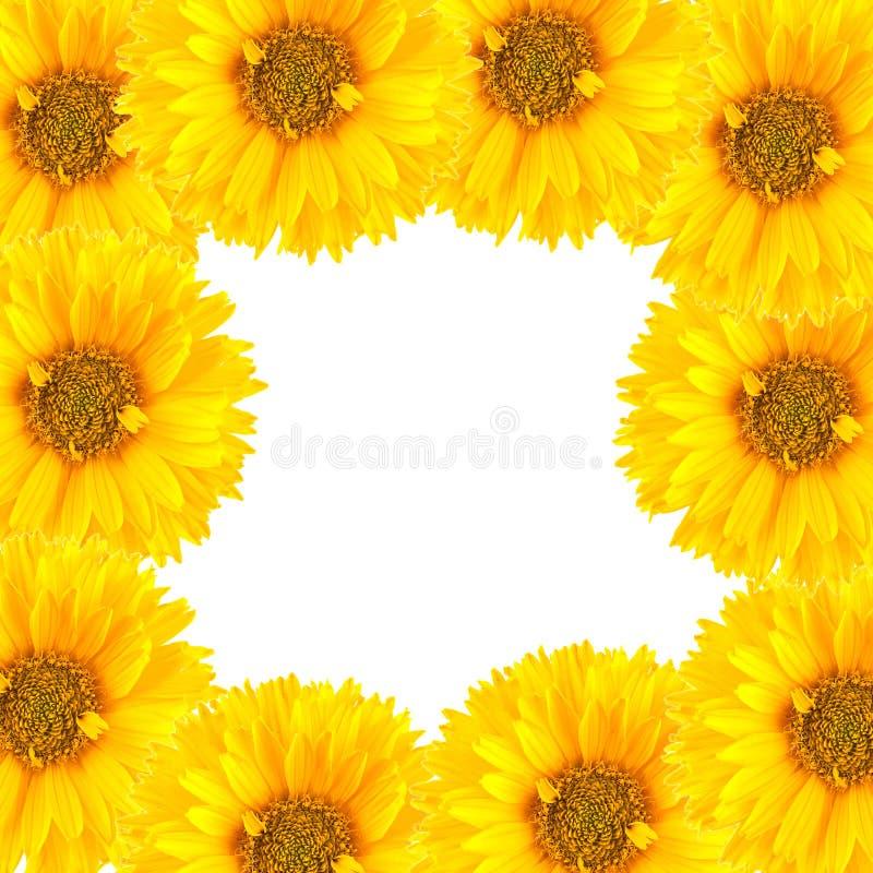 Vue des fleurs photo stock