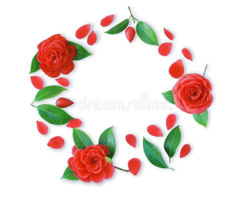 Vue des fleurs rouges de camélia, des feuilles et des pétales rouges image libre de droits