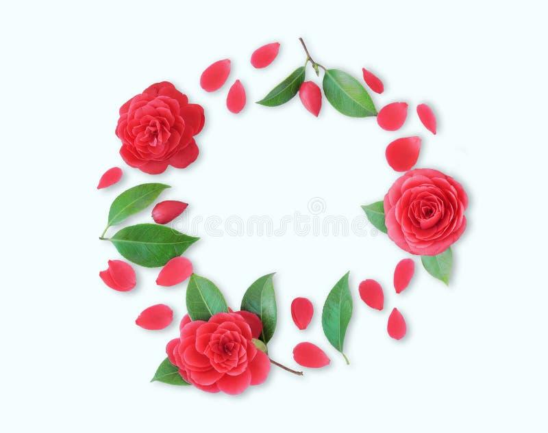 Vue des fleurs rouges de camélia, des feuilles et des pétales rouges sur le Ba blanc photos libres de droits