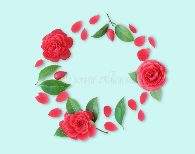 Vue des fleurs rouges de camélia, des feuilles et des pétales rouges sur le CCB cyan photographie stock libre de droits