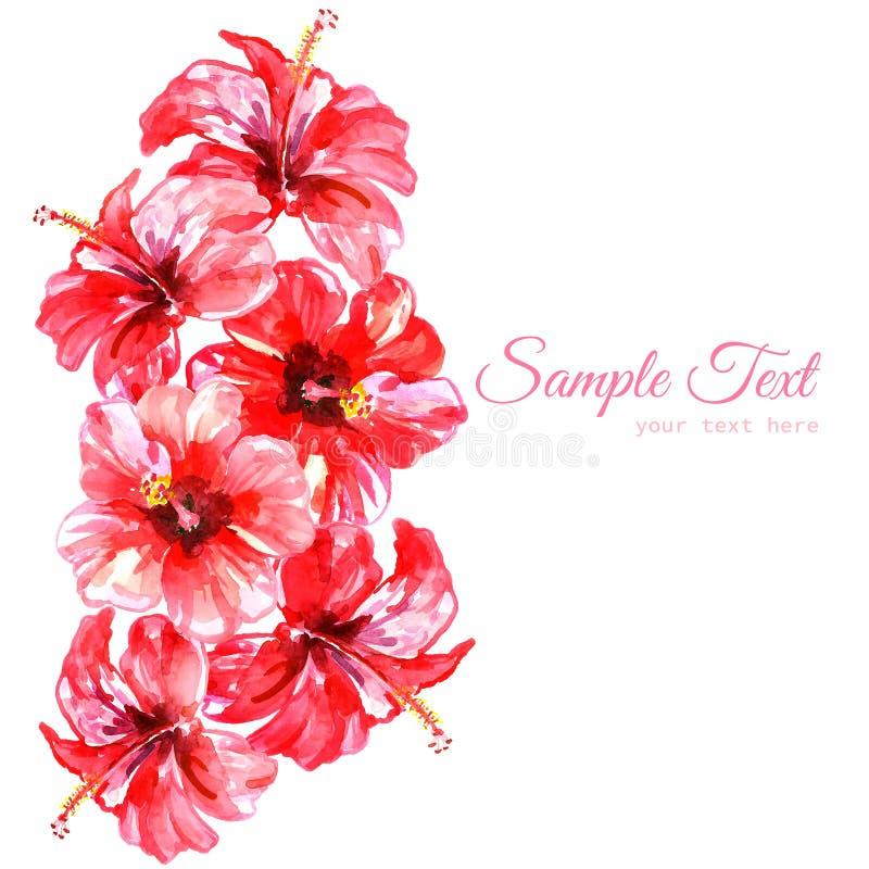 Vue des fleurs rouges de ketmie d'aquarelle illustration stock
