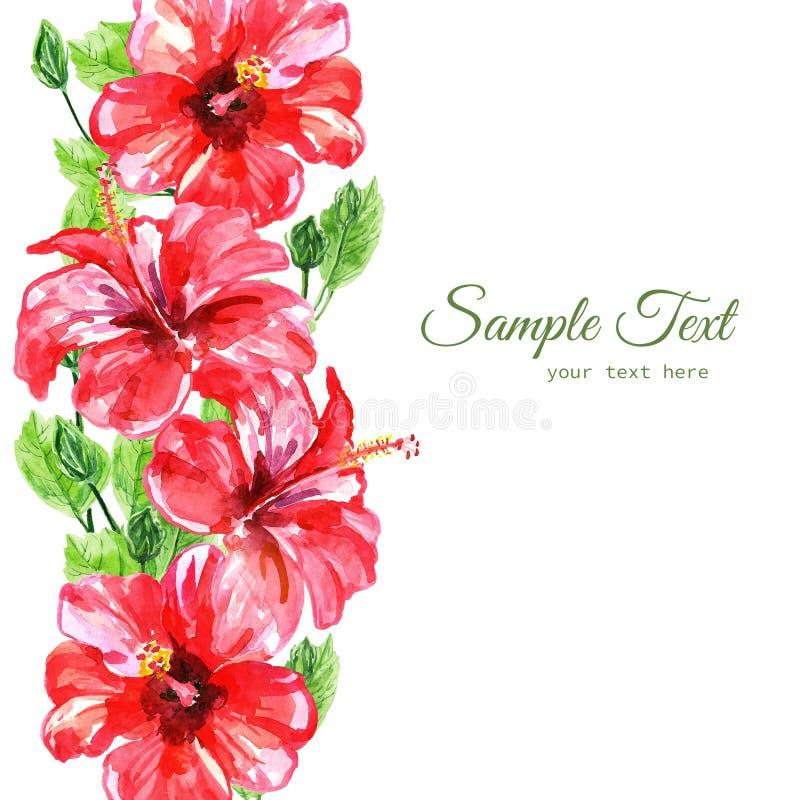 Vue des fleurs rouges de ketmie d'aquarelle illustration de vecteur