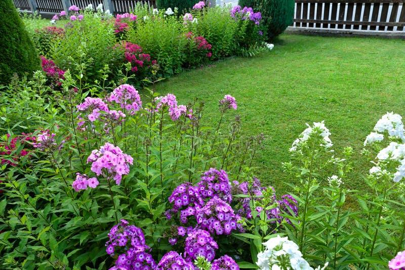 Vue des lits soignés de pelouse et de fleur avec le phlox et les thujas photographie stock libre de droits