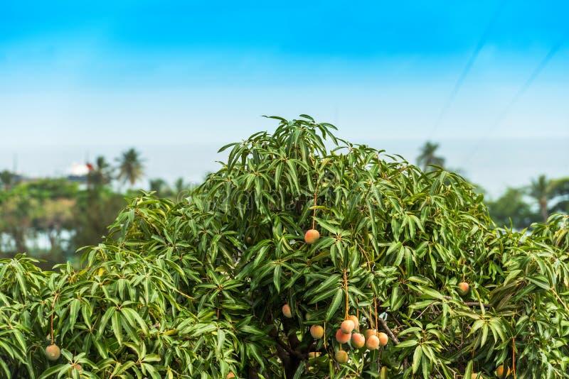 Vue des manguiers sur le fond de l'océan, Bayahibe, La Altagracia, République Dominicaine  Copiez l'espace pour le texte image libre de droits