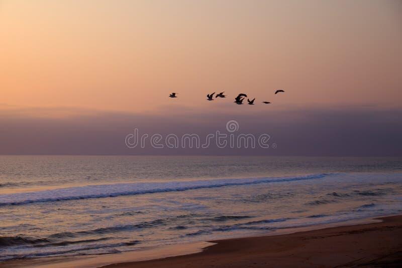 Vue des oiseaux en vol contre la plage dans le désert de Namibe photo stock